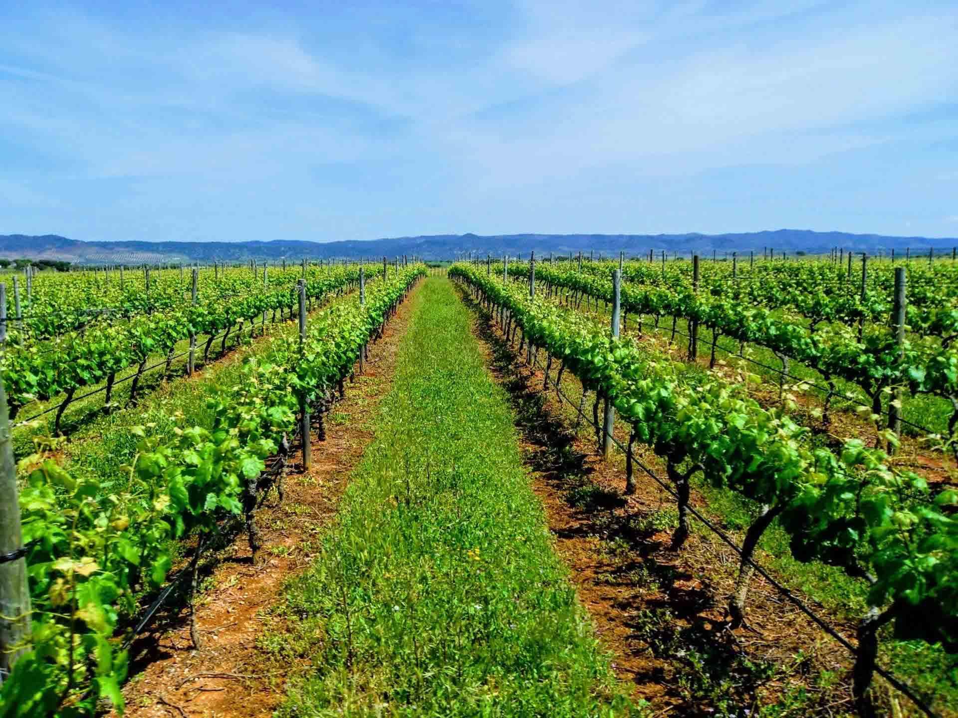 Alentejo-Vineyards