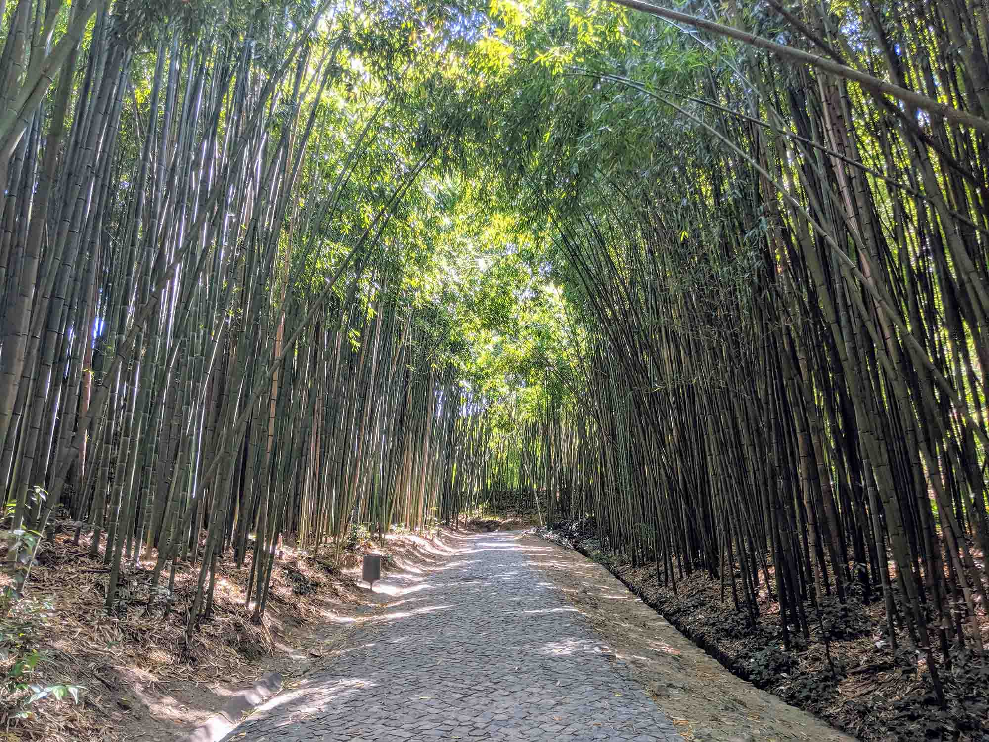 Bamboo walk coimbra university botanical gardens