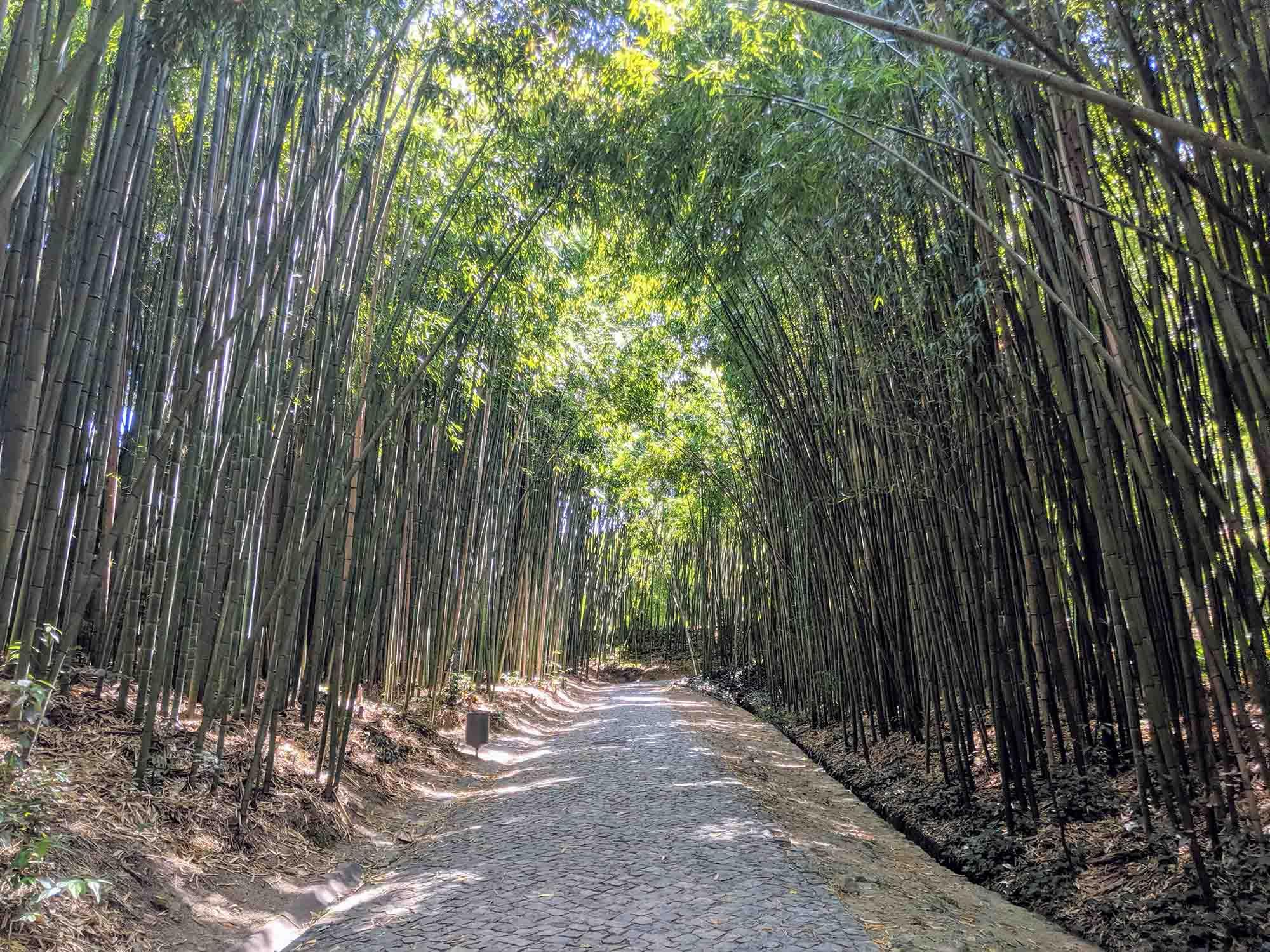 Bamboo walk coimbra university botanical gardens