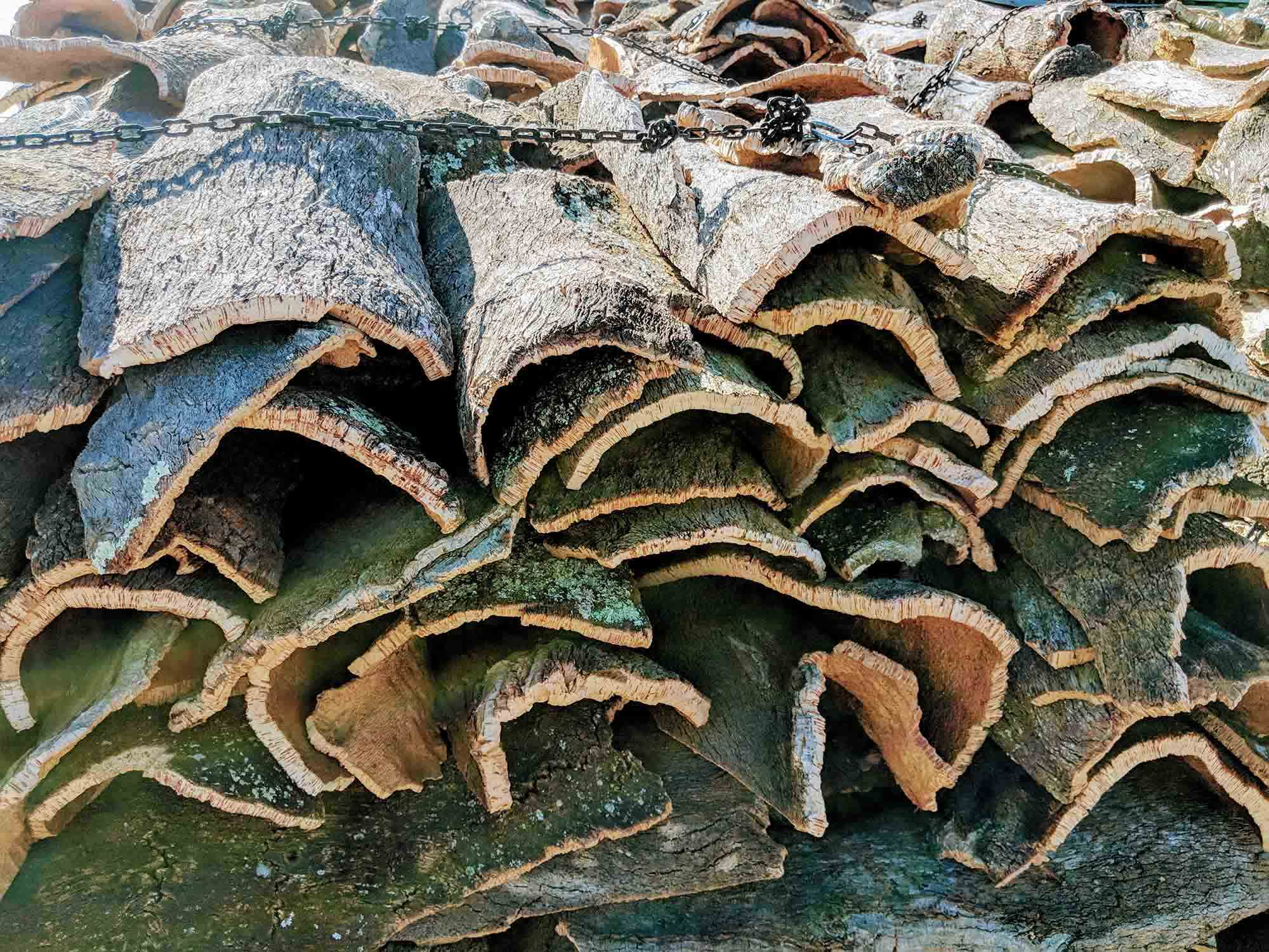 Cork drying in sun