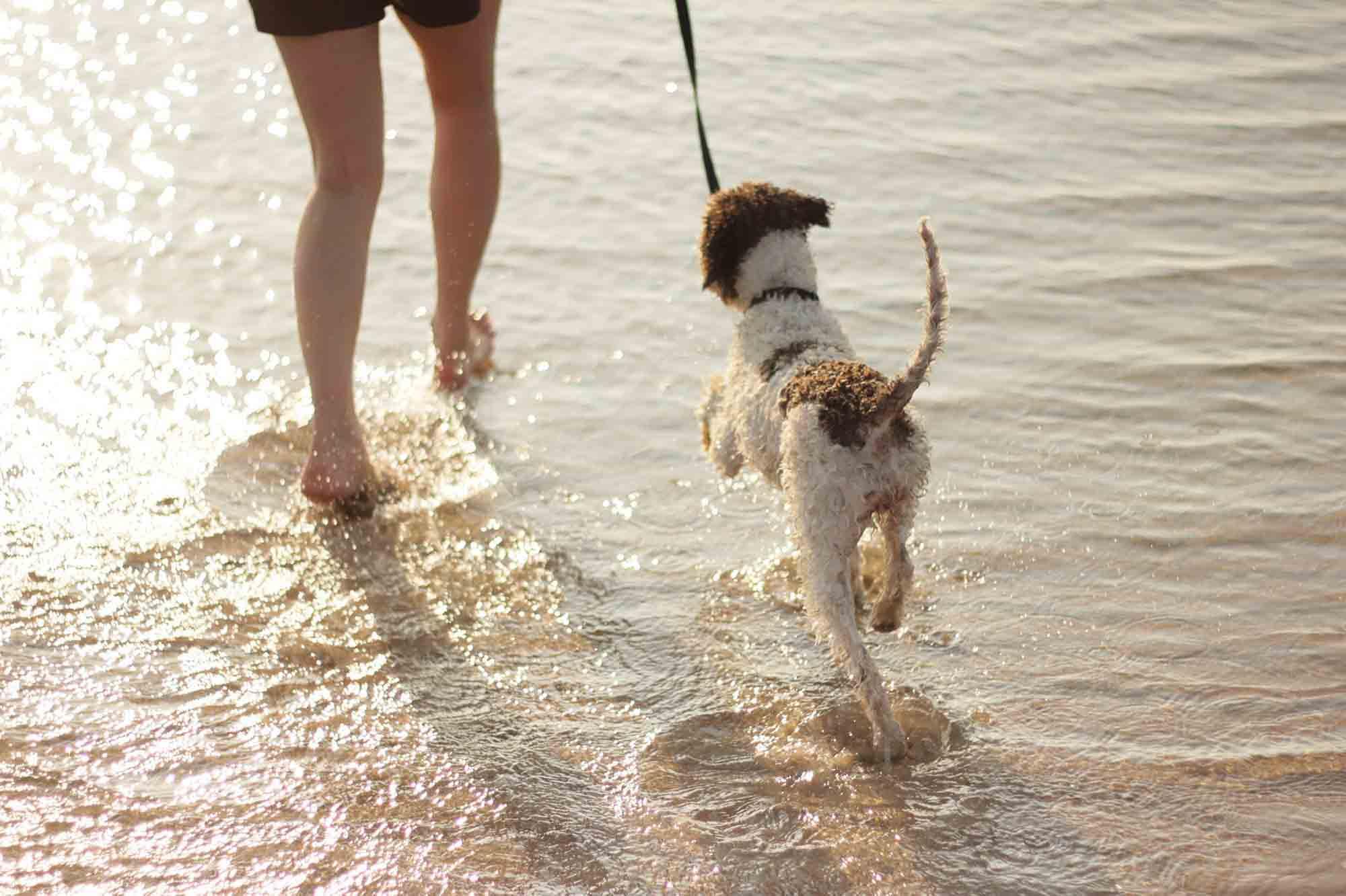 Walking dog on beach