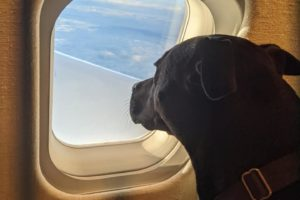 Chartering A Flight to Bring Your Pets to Portugal