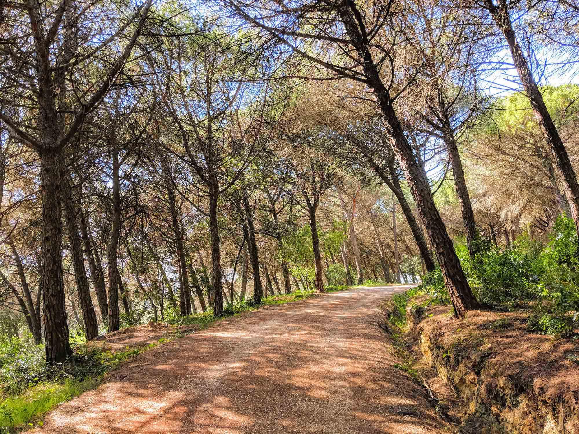monsanto Lisbon trail
