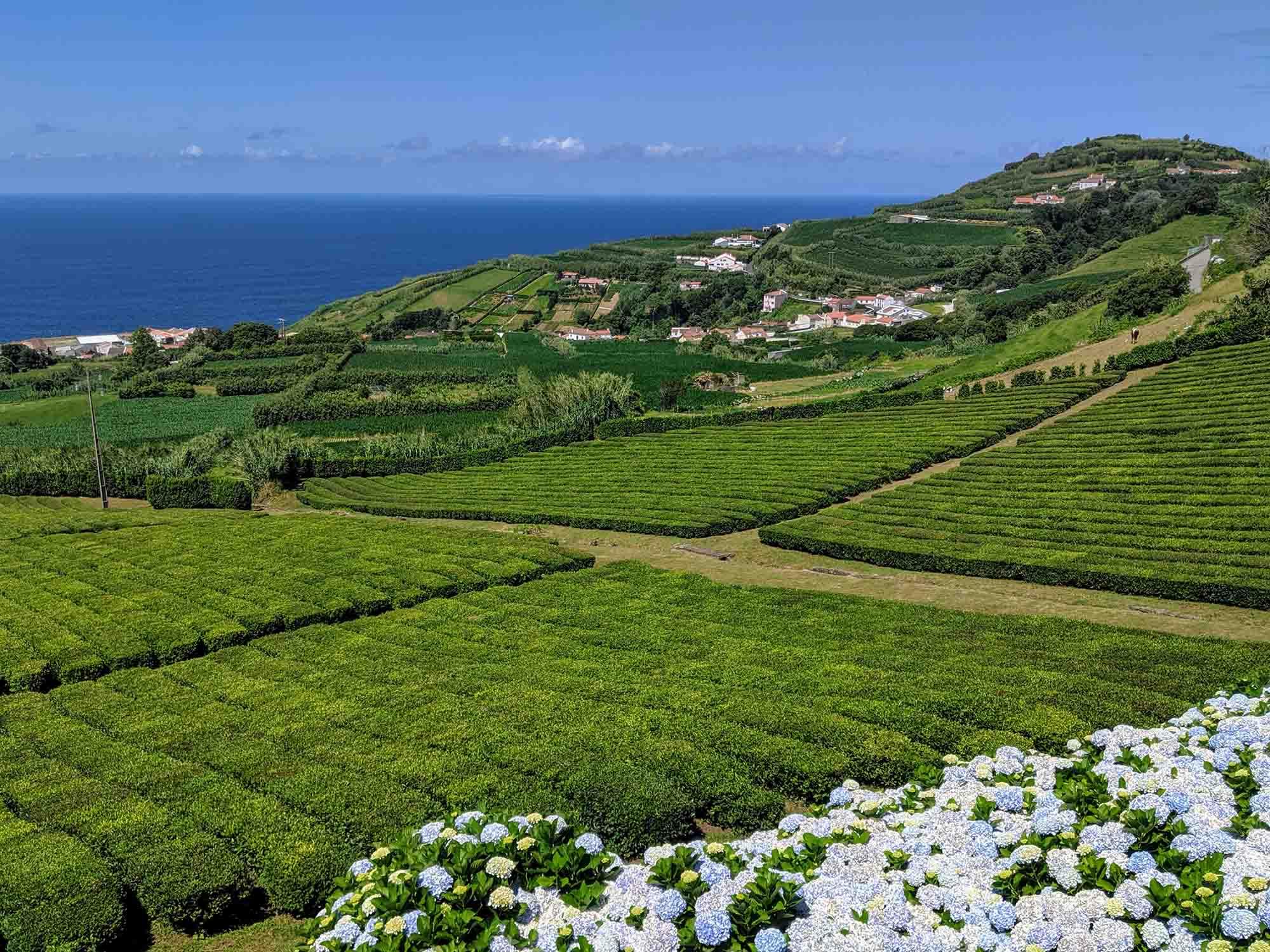 tea Porto Formoso